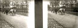 Plaque Stereo  Hotton Attelage Boeuf - Plaques De Verre