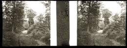 Plaque Stereo Bois De Sohan Juslenville - Plaques De Verre