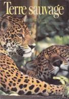 CPSM JAGUARS AU BELIZE PHOTO FOSTER TERRES SAUVAGES - Animali
