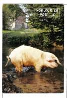 """CPM Humoristique : """"vue Sur Le Porc"""" - Cochon, Truie Au Bain - édit. M. FAROU - Couzeix - Pig - Varkens"""