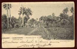 Cpa  De Guinée  Conakry Camayenne  Plantation De Mr Ch. Roux  L´ Entrée Du Parc   2LIO5 - Guinée