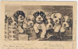Les  7 Frères  -   1901 - Hunde