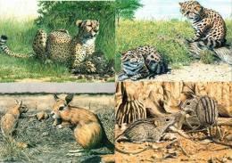 Botswana - 1992 Animals Postcard Set Mint - Botswana
