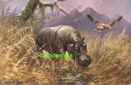 CPA ILLUSTRATEUR DESSIN ANIMAU SAUVAGE ** MULLER  ** ARTIST SIGNED WILD ANIMAL HIPPO - Hippopotamuses