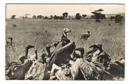CAMEROUN  /  BUITRES  ( Vautours, Aigles, Charognards ) /  Beau Timbre ( Cachet De DOUALA ) - Cameroun