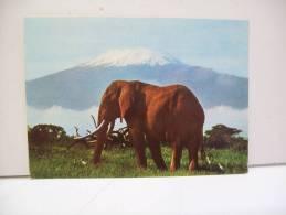 Elephant Under Kilimanjaro (Kenya.) - Kenya