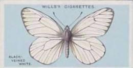 Wills Vintage Cigarette Card British Butterflies No. 43 Black Veined White 1927 - Wills