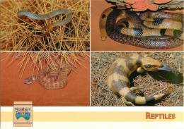 CPSM Australie-Australia-Reptiles-Serpents-Desert Death Adder   L1250 - Australie