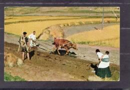 37302   Corea  Del  Nord,  Campagna -  Lavoratori,  NV(scritta) - Corea Del Nord