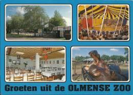 Olmense Zoo / Hippopotame Nijlpaard Hippopotamus / Circus - Balen