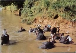 (155) Ceylon - Sri Lanka - Bathing Elephant In River - Piroscafi