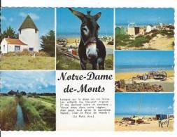 CPSM 85 Notre Dame De Monts - Frankreich