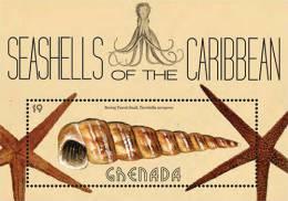 Grenada-2013-SHELLS OF THE CARIBBEAN - Marine Life