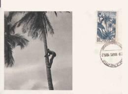 GUINEE FRANCAISE RECOLTE DES NOIX DE COCOS (CARTE MAXIMUM PUBLICITAIRE  IONYL LABOS LA BIOMARINE DIEPPE) 1952 - Guinée Française