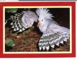 (987) New Caledonia - Nouvelle Calédonie - Le Cagou Bird - Neukaledonien