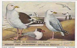 Liebig Trade Card S1610 Birds Of Beaches & Dunes No 3 Meeuwen - Liebig