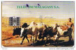 Madagascar,  MDG-07, 50 Units, Zebus , Cows, Animals, 2 Scans - Madagaskar
