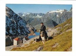 Suisse // CPM // Valais //  Col Du Grand St.Bernard, Un Chanoine Avec Les Chiens - VS Valais