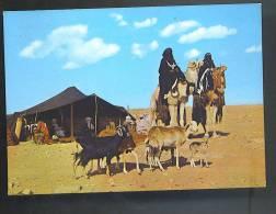 LIBIA GADAMES Tende Del Touareg Cartolina   Viaggiata 1976 - Libia