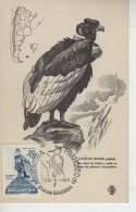 CONDOR   PRO INFANCIA FDC  ARGENTINA   PAJAROS BIRDS  OHL - Vögel