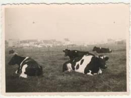 Oudegem  Kleine Zeldzame Foto 1939 - Dendermonde