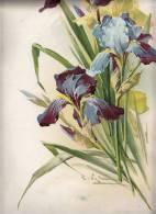IMAGES Litografia BLUMEN  DIMEN.29,8  X 44,8 Cm,CATHARINE KLEIN - Flowers