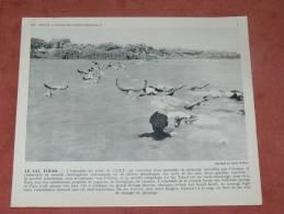 TCHAD  1950  TRAVERSEE DU LAC PAR UN TROUPEAU  FORMAT 24X21 CM - Lieux