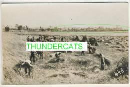 """TOP FOTOKAART BIKSCHOTE """" Het Afmaaien Van Het Koren """" 1914-18 ZIE 2 SCANS - Langemark-Poelkapelle"""