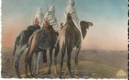 Algerie  Groupe De Touaregs - Scènes & Types