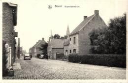 BELGIQUE -  FLANDRE OCCIDENTALE - DIKSMUIDE - DIXMUDE - BEERST - Wijnendaelestraat. - Diksmuide