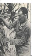ILE MAURICE - Dans Le Sillage De BOUGAINVILLE - Vanillier - Carte Postale 18 X 10.5 Cm - Mauritius