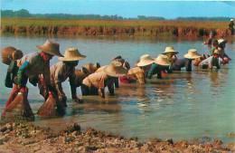THAI Farmer's Fish-fishing (Phorn Thip, N° 829) - Thaïlande