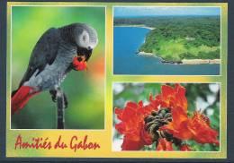 GABON  Carte Postale Perroquet Gris, Tulipier, Phare - Gabon
