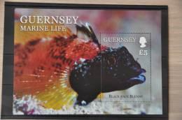 H 256 ++ 2013 GUERNSEY MARINE LIFE FISHES VISSEN POISSON - Guernsey