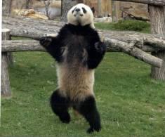 UNESCO World Heritage - Site UNESCO China - Sichuan Giant Panda Sanctuaries - Postcards