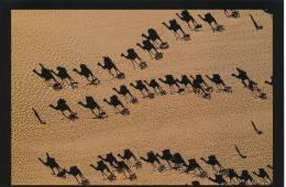 Postkarte (CP) Neu, Dromedarkaravane Bei Fachi Agadez Niger - Siehe Bild - Ca. 20 X 14 Cm - Niger
