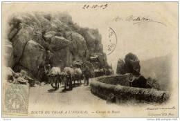 30-Route Du Vigan à L´Aigoual-Groupe De Boeufs-Précurseur-Dos Non Divisé - France
