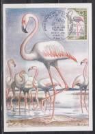 = Carte Postale Premier Jour Paris 21 Mars 70 N°1634 Année Européenne De La Nature Flamant Rose - Maximum Cards