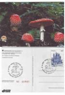 PERGINE VALSUGANA 1997 TRENTO  AMANITA MUSCARIA FUNGHI  PILZE  MUSHROOM CHAMPIGNON   SETAS - Funghi