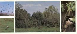 (312) Bird - Oiseau - Russia Birdwatching - Oiseaux
