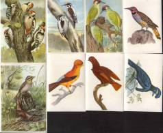 KOSMOS-Bunte Vögel Aus Aller Welt-Teil II-Bilder:- 51-58(8 Stück) - Cigarette Cards