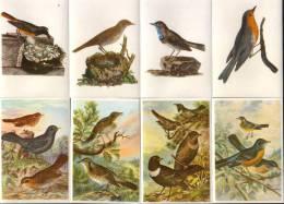 KOSMOS-Bunte Vögel Aus Aller Welt-Teil II-Bilder:-75-82(8 Stück) - Other Brands
