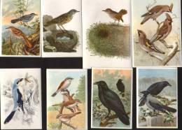 KOSMOS-Bunte Vögel Aus Aller Welt-Teil II-Bilder:-83-90(8 Stück) - Cigarette Cards