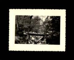 20 - CORSE - Forêt De VIZZAVONA - Photo - Lieux