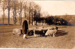Camp De Prisonniers D'Ohrdruf 1ere Guerre Mondiale 1914-1918 Berger Avec Ses Moutons - Guerre 1914-18