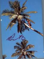 (333) Coconut Tree Climbing - Tonga