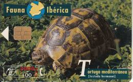 SPAIN - Turtle, 03/97, Used