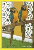 PAPPAGALLI - Vögel