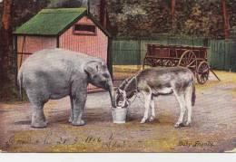 TUCK Animal Life Series 6064 - BEBE ELEPHANT ET ANE - BABY ELEPHANT AND DONKEY - Éléphants