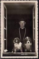 St. Bernard  Bernhardiner - GR Grisons
